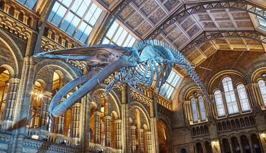 Le sterline insanguinate del Natural History Museum